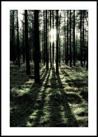 Forest Sunlight Affiche