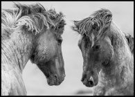Wild Mustang Horses, Affiche
