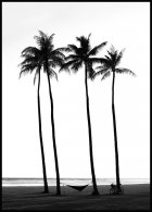 Beach Palm Trees Affiche