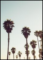 California Palms, Poster