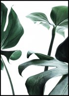 Monstera no. 1 Affiche
