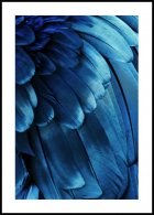 Blue Feathers, Poster