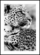 Snow Leopard, Poster