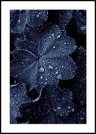 Blue Leaf Droplets, Affiche