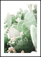 Prickly Pear Cactus, Affiche