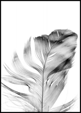 Feather, Affiche