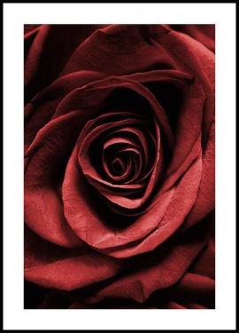 Rose Rouge Poster