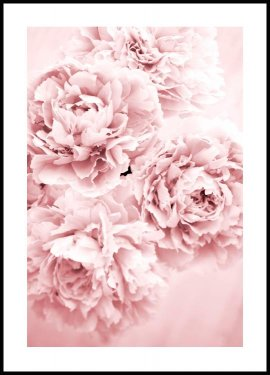 Pink Flower Dream, Poster