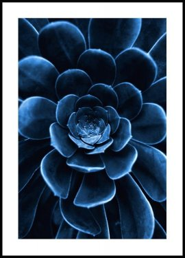 Blue Flower Cactus, Poster