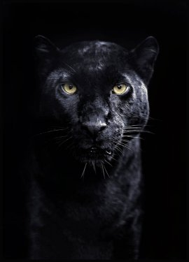 Panther Affiche
