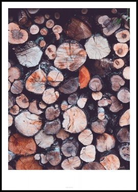 Tree Rings, Poster