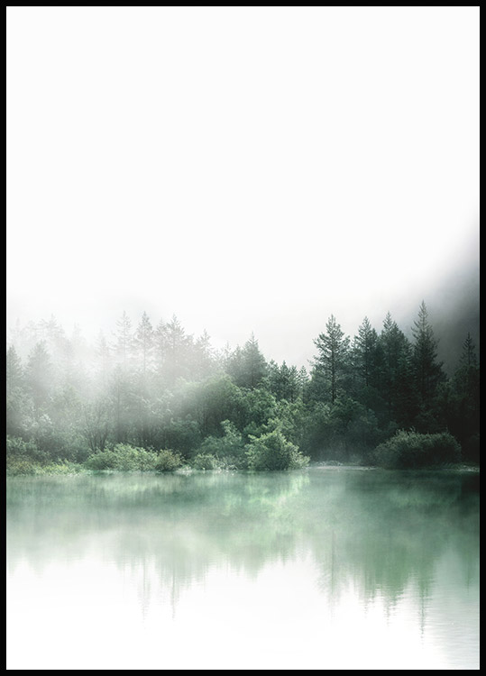 Forest Reflections Poster