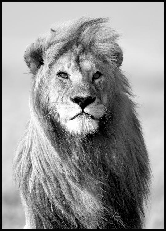 Majestic Lion, Poster