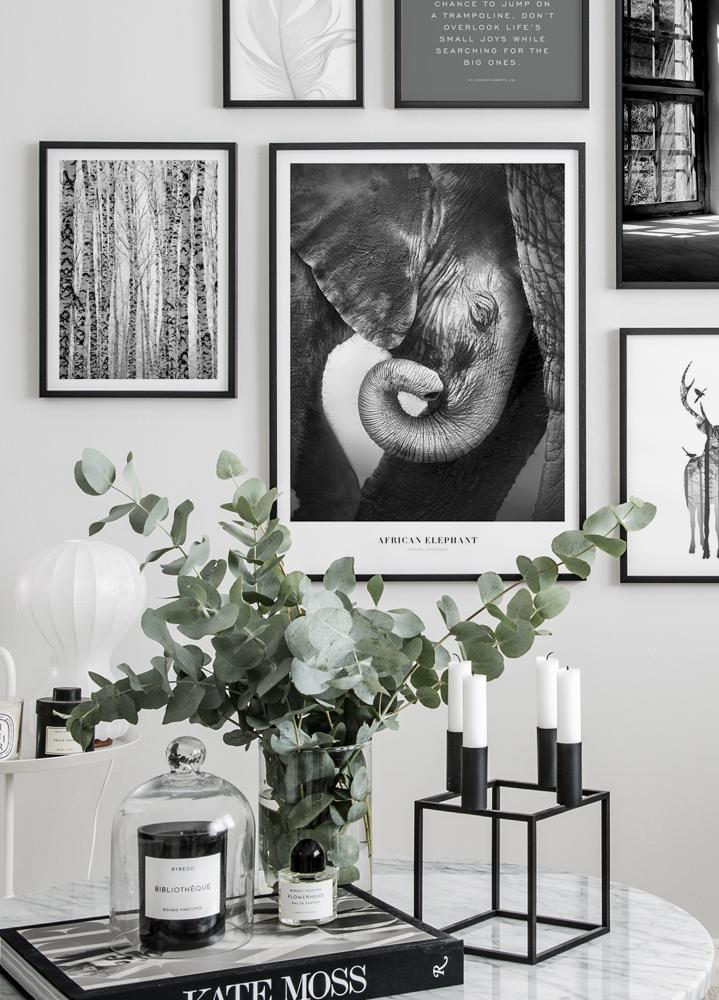 African Elephant, Poster