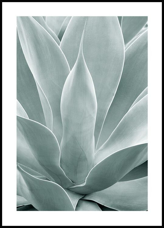 Agave cactus, Affiche
